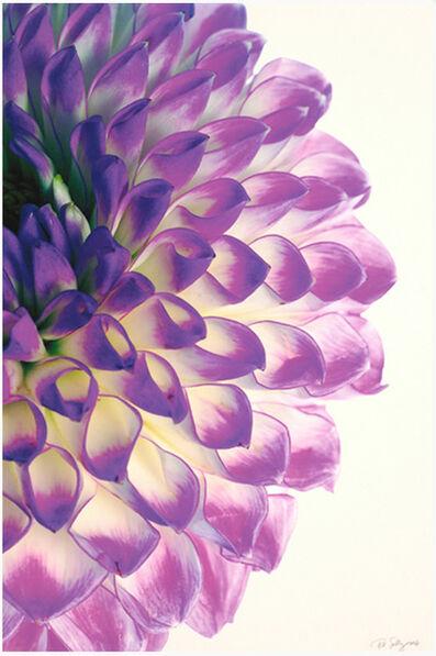 Paul Solberg, 'Burst', 2006