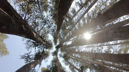 Greg Grano, 'I'm A Tree', 2020