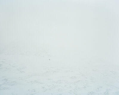 Eamon Mac Mahon, 'Barrens Caribou, Yukon', 2014