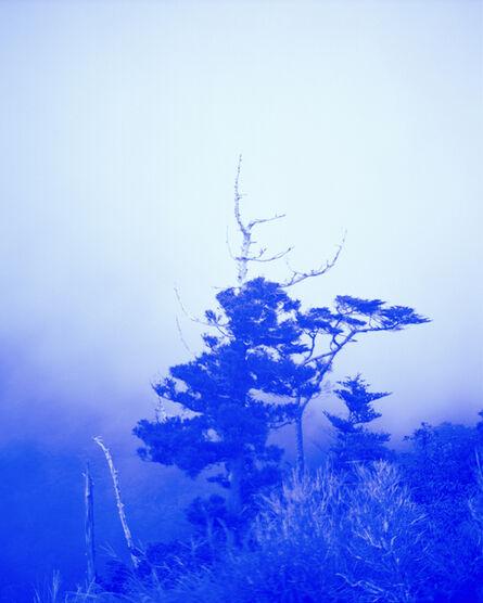 Alexander Mourant, 'Blue Tree', 2017