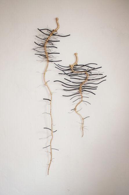 Dalya Luttwak, 'Lettuce Roots at Three Weeks Old', 2015