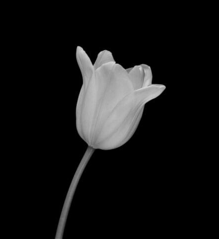 Mariana Cook, 'White Tulip, New York City, 7 February 2000, 1:45pm', 2000