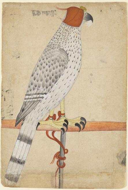 'Ferocius Falcon', late 18th century