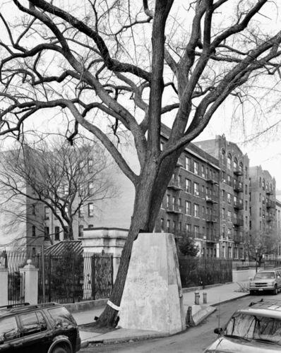 Mitch Epstein, 'American Elm, Eastern Parkway, Brooklyn ', 2012