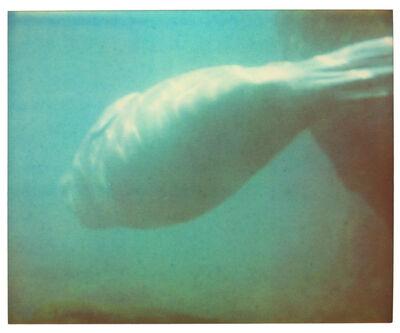 Stefanie Schneider, 'Dugong IV - Stay, Contemporary, Polaroid, Color, Coney Island, Animal, Blue', 2006