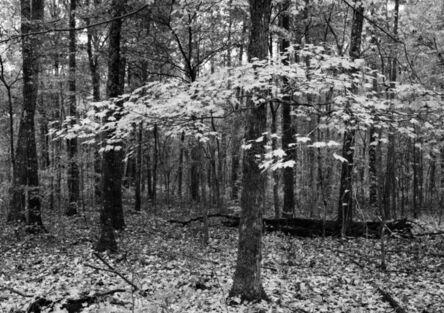 Jerome Hawkins, 'Autumn Leaves', 2006