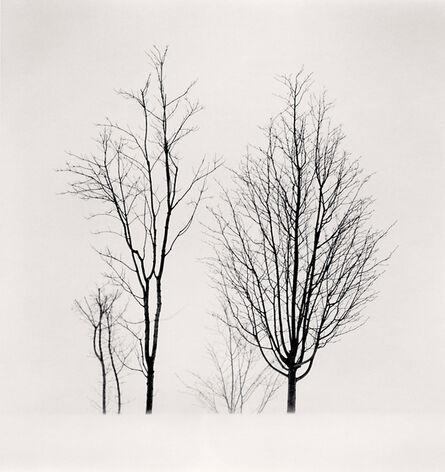 Michael Kenna, 'Bare Branches, Biei, Hokkaido, Japan', 2012