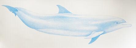 Hannah Hanlon, 'Bottlenose Dolphin', 2020