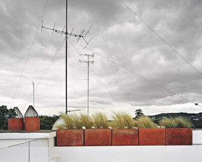 Brad Temkin, 'Birds (looking East), Dun Laoghrie, County Dublin, Ireland, August 2009'