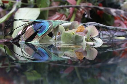 Andrea Bonfils, 'Submerged Garden 7226', 2020
