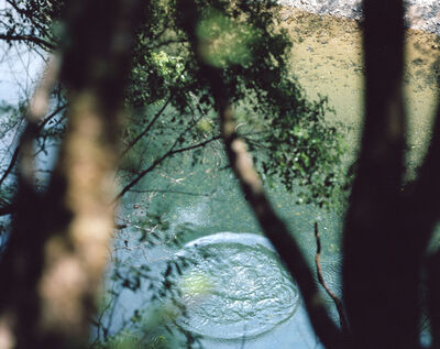 Risaku Suzuki, 'Between the Sea and the Mountain – Kumano 14, DK-507', 2014