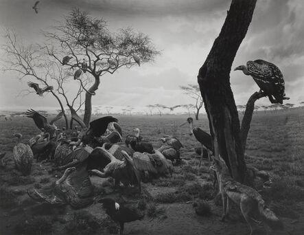 Hiroshi Sugimoto, 'Hyena-Jackal-Vulture', 1976
