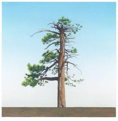 Greg Rose, 'Waterman Tree [N34*20.193+W117*56.124]', 2014