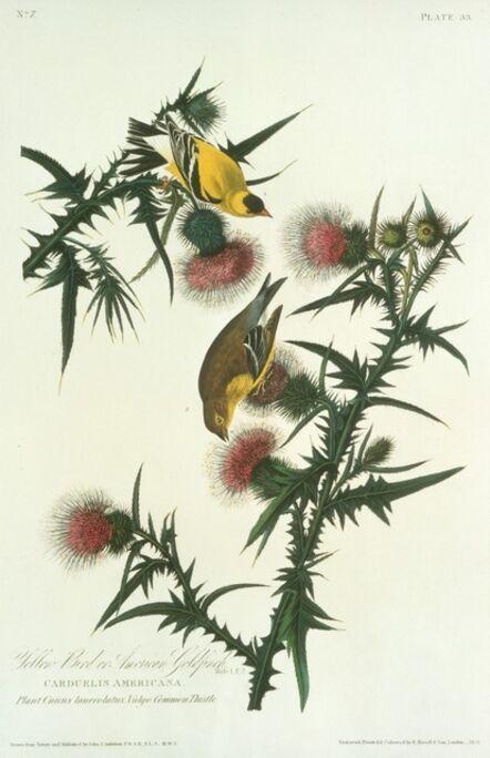 Robert Havell after John James Audubon, 'Yellow Bird or American Goldfinch', 1828