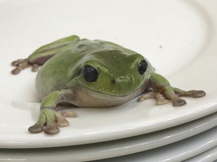 Juergen Teller, 'Frogs and Plate No. 1, London', 2004