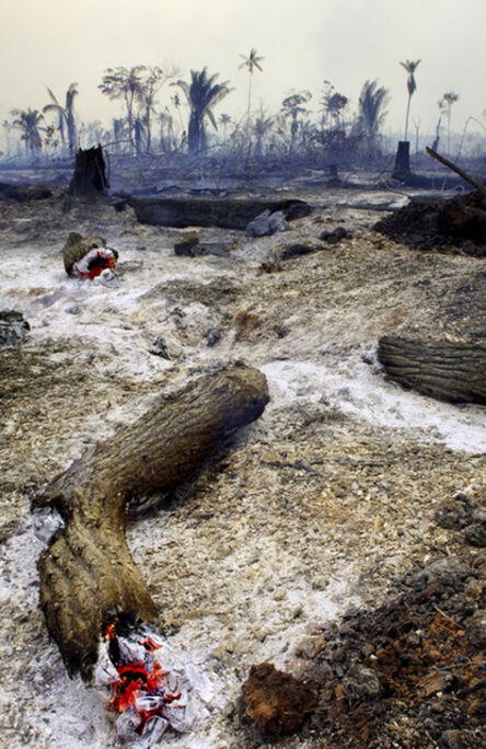 Attila Lorant, 'Deforestation (Burnt Forest)', 2005