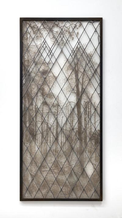 Matthew Brandt, 'Pine Barrens 7332', 2018