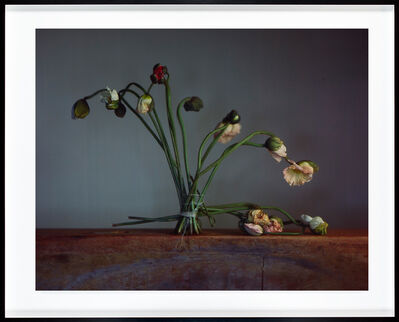 Richard Learoyd, 'First flowers', 2018