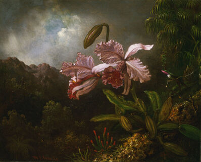 Martin Johnson Heade, 'Orchids in a Jungle', 1871-1874