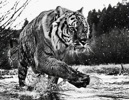 David Yarrow, 'Mystic River'