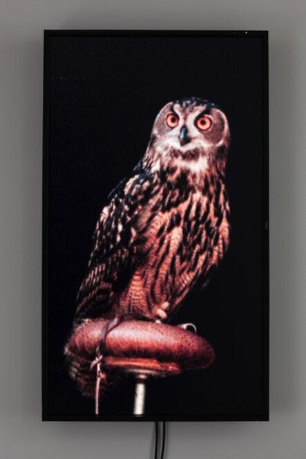 Diana Thater, 'Male Eurasian Eagle Owl (Big Bird)', 2012
