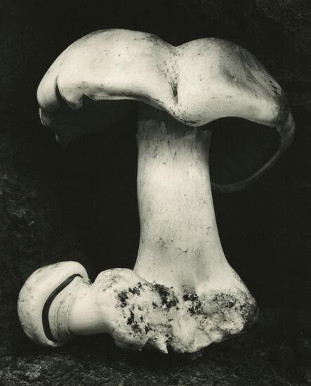 Edward Weston, 'Toadstool', 1931