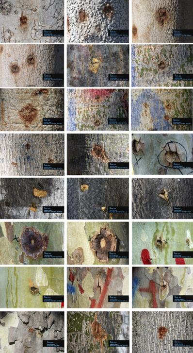 Voluspa Jarpa, 'Políptico Árboles Heridos (Wounded Trees Polyptych)', 2021