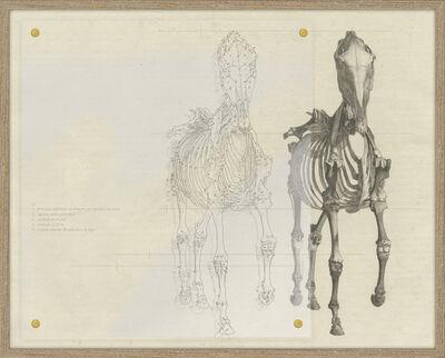 Ivan Grilo, 'Estudo para Alma (depois de Stubbs)', 2014