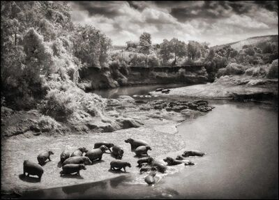 Nick Brandt, 'Hippos on the Mara River, Maasai Mara, 2002', 2002