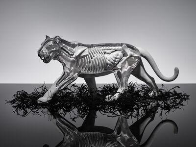 Omar Torres, 'TIGER', 2015