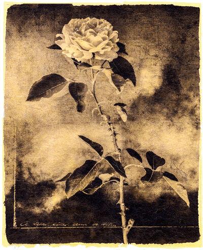 Brigitte Carnochan, 'A Sepal, Petal, and a Thorn', 2018