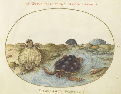 Joris Hoefnagel, 'Animalia Aqvatilia et Cochiliata (Aqva): Plate I', ca. 1575/1580