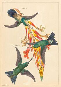 Heinrich Gottlieb Ludwig Reichenbach, 'Three Hummingbirds with Plant'