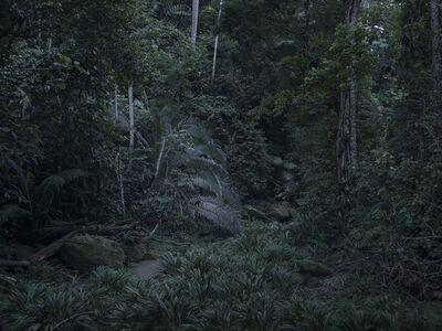 Yann Gross, 'Floresta', 2019