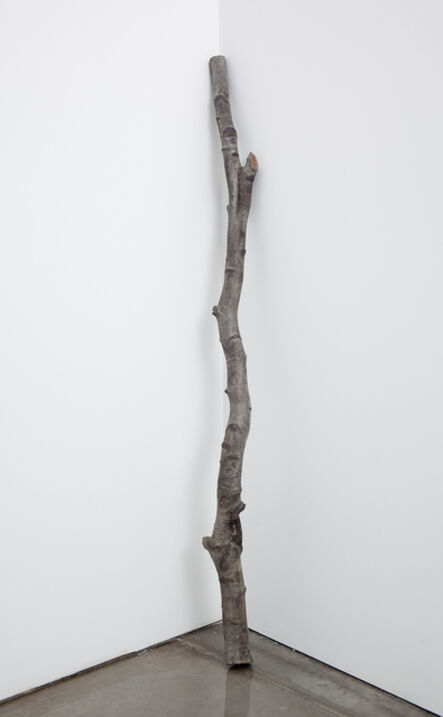 Cecilia Edefalk, 'Weeping Birch Stem', 2010