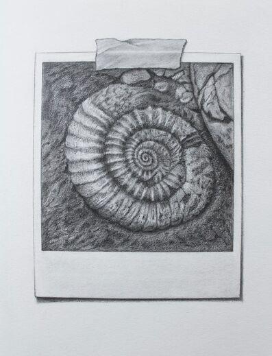 Tammy Liu-Haller, 'Snapshot Series #5: Ammonite', 2020