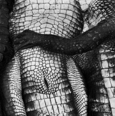 Debbie Fleming Caffery, 'Gator Paw', 1995