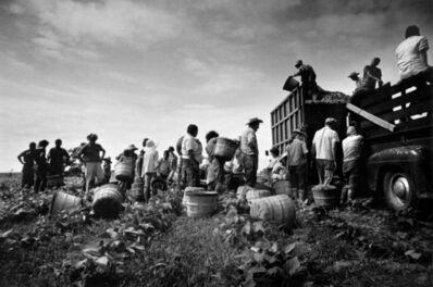 Steve Schapiro, 'Mirant Bean Pickers, Arkansas, 1961'