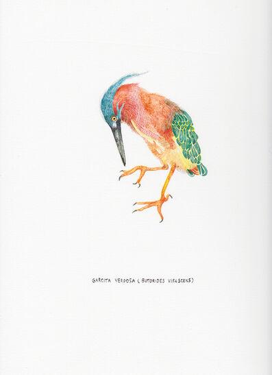 Kevin Simón Mancera, 'Garcita Verdosa (Butorides Virescens)', 2017