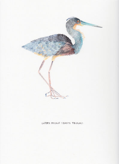 Kevin Simón Mancera, 'Garceta Tricolor (Egretta Tricolor)', 2017