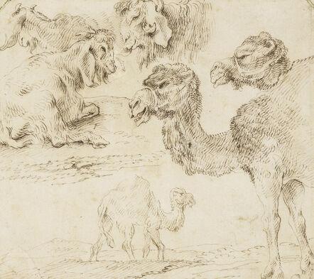 Giovanni Benedetto Castiglione, 'Studies of dromedaries and goats', ca. 1630