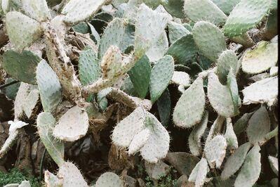 Fakhri Elghezal, 'Cactus', 2018