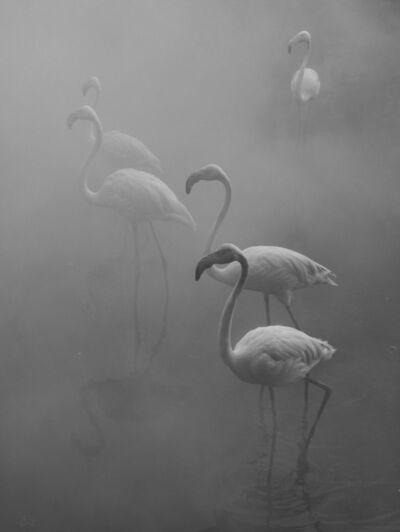Nick Brandt, 'Flamingos I, Zimbabwe', 2020