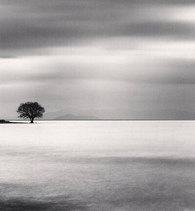 Michael Kenna, 'Biwa Lake Tree, Study 5, Omi, Honshu, Japan', 2012