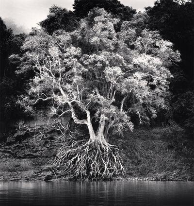 Michael Kenna, 'Kokdua Tree and Exposed Roots, Mekong River, Luang Prabang, Laos', 2015