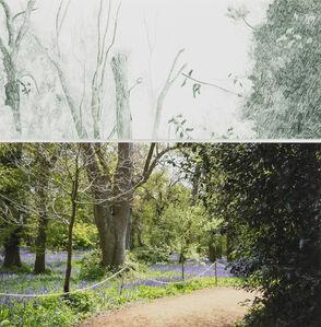 Gabriela Albergaria, 'Harcourt Arboretum, 641', 2011