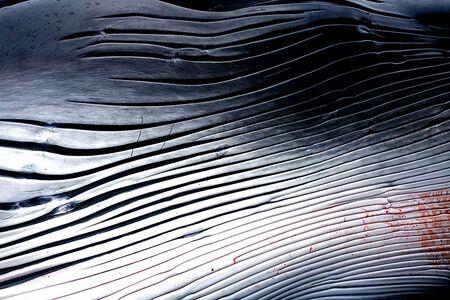 "Lieko Shiga, 'Full Tide, from the series ""Canary""', 2007"