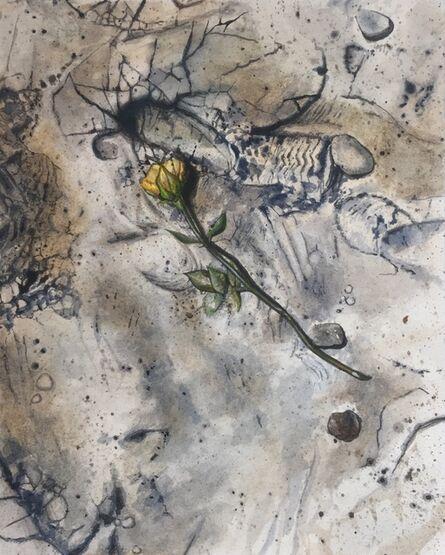 Jay Davis, 'Untitled Rose #1', 2020