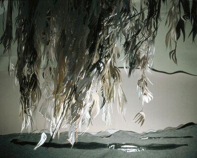 Shirley Wegner, 'Eucalyptus with Lake', 2007