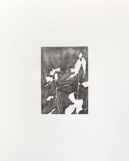 Lena Ditlmann, 'Flower #2', 2016